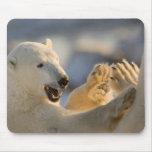 Canada, Manitoba, Hudson Bay, Churchill. 6 Mouse Pad
