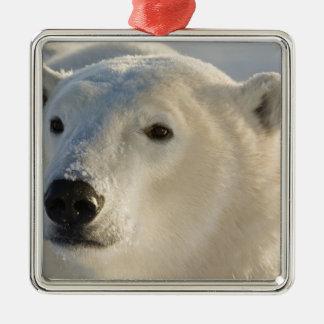 Canada, Manitoba, Hudson Bay, Churchill. 7 Metal Ornament