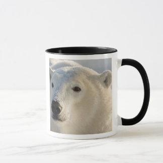 Canada, Manitoba, Hudson Bay, Churchill. 7 Mug