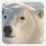 Canada, Manitoba, Hudson Bay, Churchill. 7 Square Sticker
