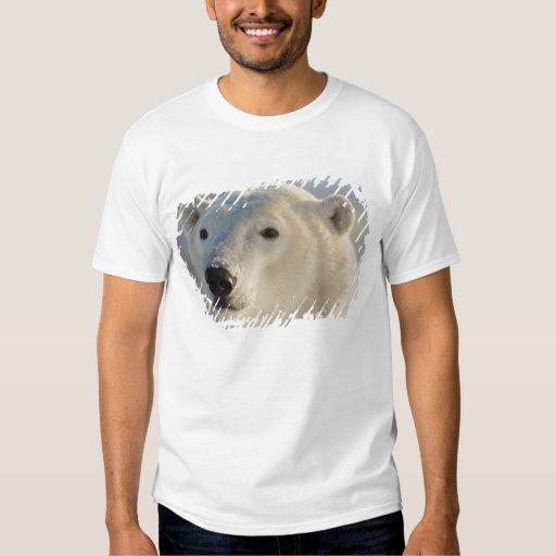 Canada, Manitoba, Hudson Bay, Churchill. 7 T-shirt