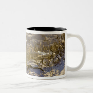 Canada, Manitoba, Hudson Bay, Churchill. 9 Coffee Mugs