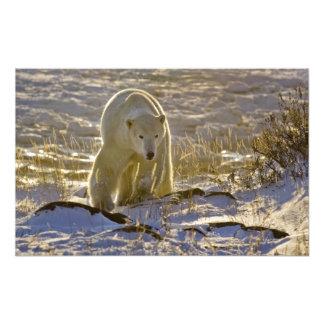 Canada, Manitoba, Hudson Bay, Churchill. 9 Photographic Print
