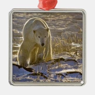 Canada, Manitoba, Hudson Bay, Churchill. 9 Square Metal Christmas Ornament