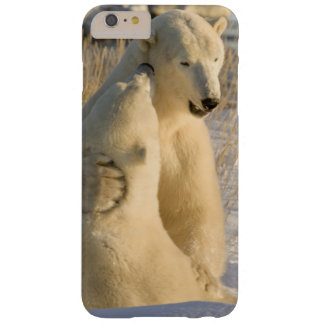 Canada, Manitoba, Hudson Bay, Churchill. Barely There iPhone 6 Plus Case