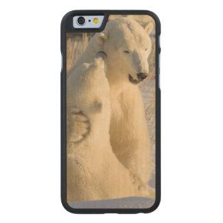 Canada, Manitoba, Hudson Bay, Churchill. Carved® Maple iPhone 6 Slim Case