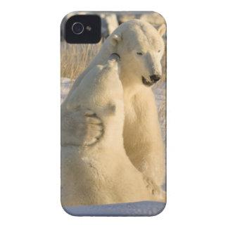 Canada, Manitoba, Hudson Bay, Churchill. Case-Mate iPhone 4 Case