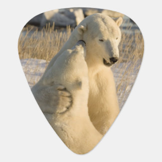 Canada, Manitoba, Hudson Bay, Churchill. Guitar Pick