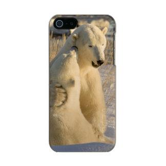 Canada, Manitoba, Hudson Bay, Churchill. Incipio Feather® Shine iPhone 5 Case