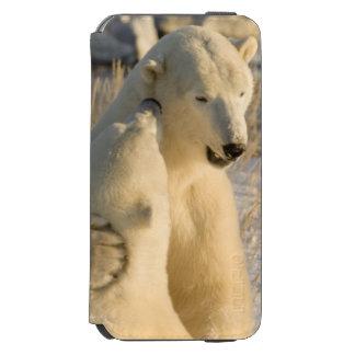 Canada, Manitoba, Hudson Bay, Churchill. Incipio Watson™ iPhone 6 Wallet Case