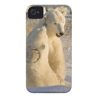 Canada, Manitoba, Hudson Bay, Churchill. iPhone 4 Case