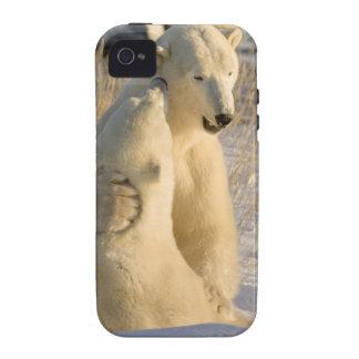 Canada, Manitoba, Hudson Bay, Churchill. iPhone 4 Covers