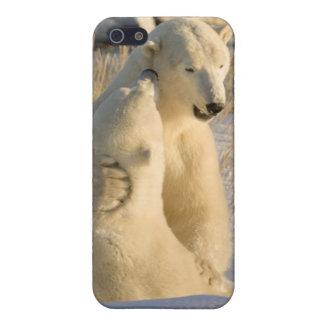 Canada, Manitoba, Hudson Bay, Churchill. iPhone 5/5S Cover