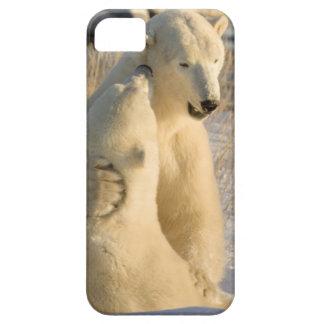 Canada, Manitoba, Hudson Bay, Churchill. iPhone 5 Cases