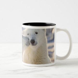Canada, Manitoba, Hudson Bay, Churchill. Polar Mug