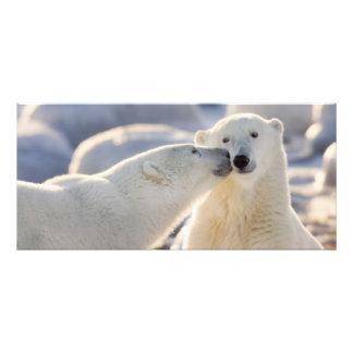 Canada, Manitoba, Hudson Bay, Churchill. Polar Photographic Print