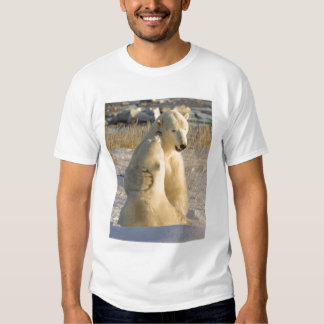 Canada, Manitoba, Hudson Bay, Churchill. Shirt