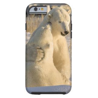Canada, Manitoba, Hudson Bay, Churchill. Tough iPhone 6 Case