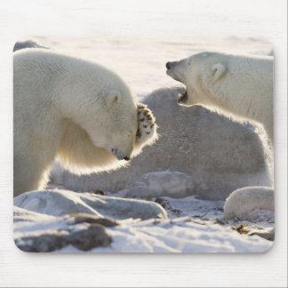 Canada, Manitoba, Hudson Bay, Churchill. Two Mouse Pad