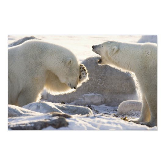 Canada, Manitoba, Hudson Bay, Churchill. Two Photo Print