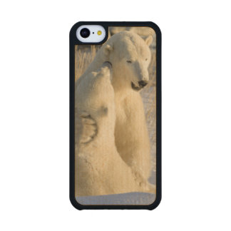 Canada, Manitoba, Hudson Bay, Churchill. Carved® Maple iPhone 5C Case
