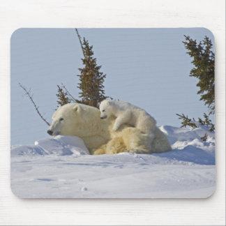Canada, Manitoba, Wapusk National Park. Polar 2 Mouse Pads