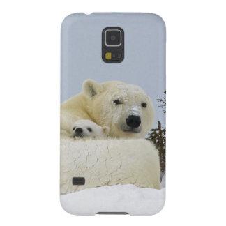 Canada, Manitoba, Wapusk National Park. Polar 8 Galaxy S5 Case
