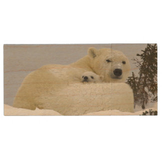 Canada, Manitoba, Wapusk National Park. Polar 8 Wood USB Flash Drive