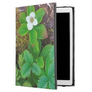 Canada, New Brunswick, ,  2 iPad Pro Case