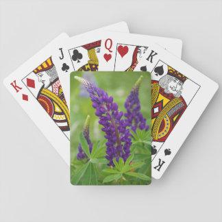 Canada, New Brunswick, Shampers Bluff. Poker Cards