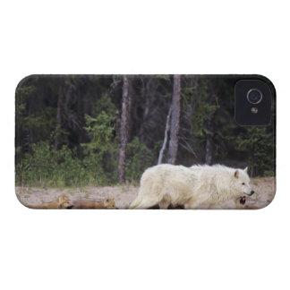 Canada, Northwest Territories, Great Slave Lake. Case-Mate iPhone 4 Case