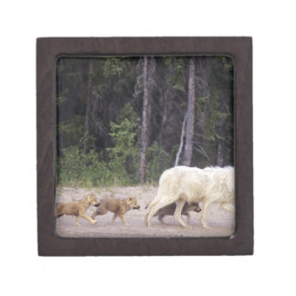 Canada, Northwest Territories, Great Slave Lake. Gift Box