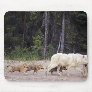 Canada, Northwest Territories, Great Slave Lake. Mouse Pad