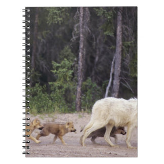 Canada, Northwest Territories, Great Slave Lake. Notebook