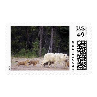 Canada, Northwest Territories, Great Slave Lake. Postage