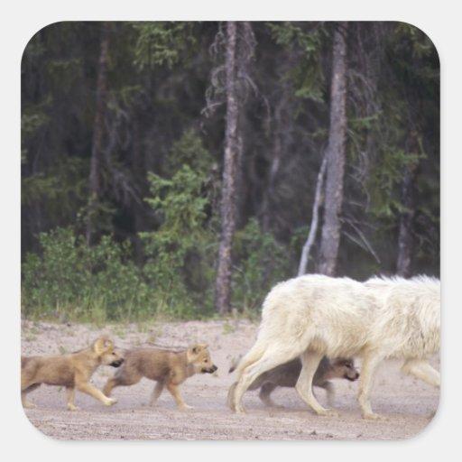 Canada, Northwest Territories, Great Slave Lake. Square Stickers