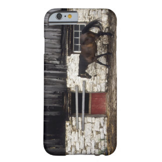 Canada: Ontario, Bruce Peninsula, Cape Chin, Barely There iPhone 6 Case