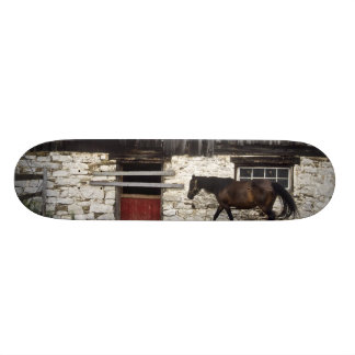Canada: Ontario, Bruce Peninsula, Cape Chin, Skateboard