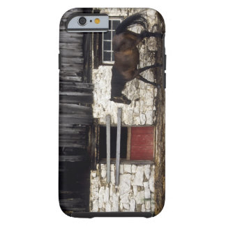 Canada: Ontario, Bruce Peninsula, Cape Chin, Tough iPhone 6 Case