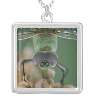 Canada, Ontario, close-up of Green Darner on Pendant