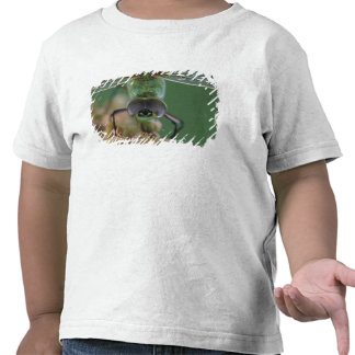 Canada, Ontario, close-up of Green Darner on T Shirts