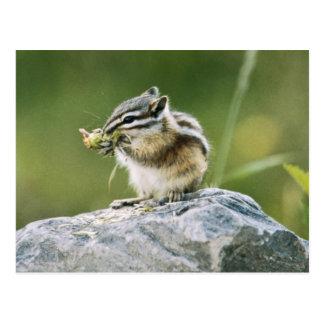 Canadá, parque nacional de jaspe, pino amarillo tarjeta postal