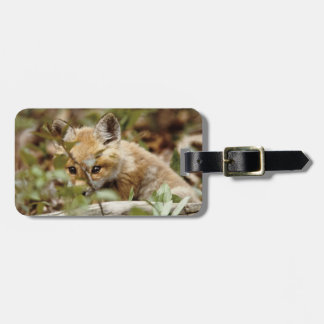 Canada, Point Pelee National Park. Young red fox Tag For Luggage