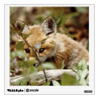 Canada, Point Pelee National Park. Young red fox Wall Sticker