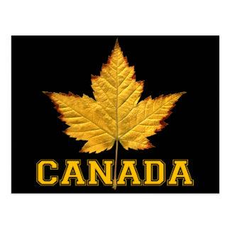 Canada Postcards Varsity Canada Souvenir Postcards