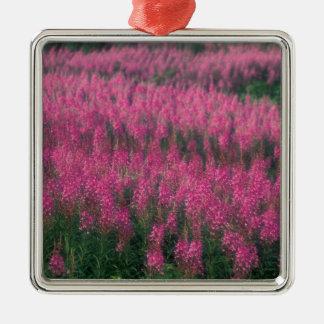 Canada, Quebec, Gaspe. Purple Lythrum Flowers, Metal Ornament