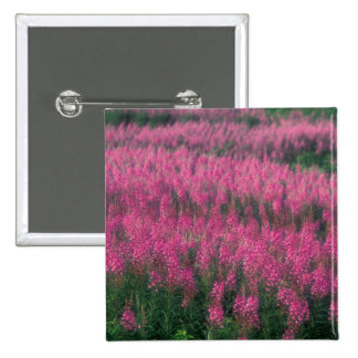 Canada, Quebec, Gaspe. Purple Lythrum Flowers, Pinback Button