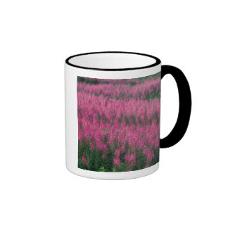 Canada, Quebec, Gaspe. Purple Lythrum Flowers, Ringer Mug