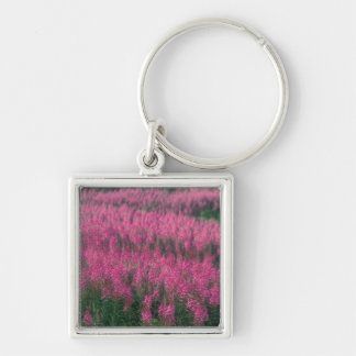 Canada, Quebec, Gaspe. Purple Lythrum Flowers, Silver-Colored Square Keychain