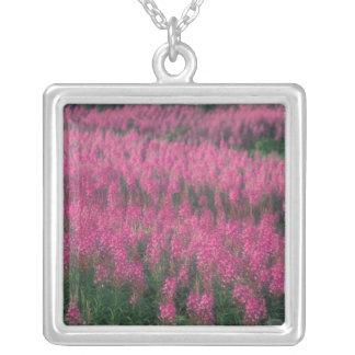 Canada, Quebec, Gaspe. Purple Lythrum Flowers, Square Pendant Necklace